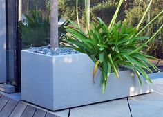 A #stepped #planter with an Olive tree and Agapanthus in a #large #roof #terrace