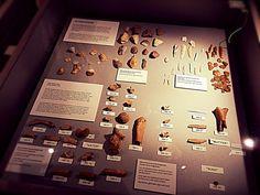 #Wildgehege #Neandertaler #Museum #Natur #Neandertal #Neanderthal-Museum #Reisen #Travel #Familie #Familienausflug #Tiere #Wald #Ferienwohnung #Knochen #Bones