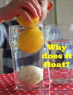 Kabuklu Limon neden suda batmaz ? (Resimli deney) - Önce Okul Öncesi Ekibi Forum Sitesi - Biz Bu İşi Biliyoruz