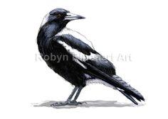 Australian Magpie - digital painting by Robyn Rinehart