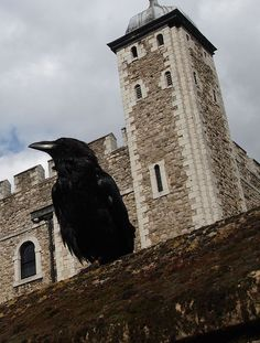 Tower of London's famous ravens Crow Books, Gothic Buildings, Moon Shadow, Jackdaw, Dark Pictures, Crows Ravens, Sense Of Place, Tower Of London, Still Life Art