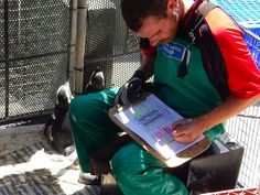 Volunteer with Via Volunteers in South Africa and help to rehabilitate endangered African Penguins and other marine bird species at the SANCCOB rehab centre near Cape Town. Volunteer Work, Volunteer Abroad, African Penguin, Gap Year, Bird Species, Backpacker, Volunteers, Cape Town, Penguins