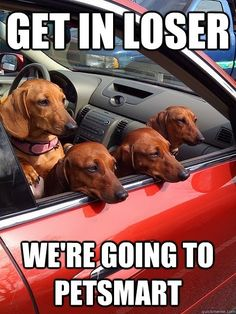 Mean Girls as Doxies... would that be called Mean Bitches then?