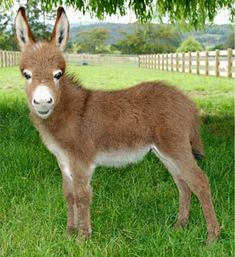 One day I will own a herd of mini donkeys and mini goats and be the happiest person EVER!