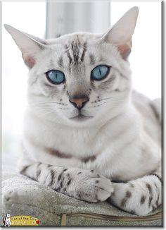 Rafaello, the Cat of the Day