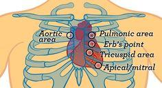 Physical Assessment (Adult) Auscultate over the precordium at five  auscultatory sites. 83e9c6f5f3