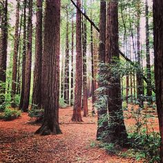 Photo Of Joaquin Miller Park Redwoods Urban Hiking Sf Bay Area And Beyond Pinterest East