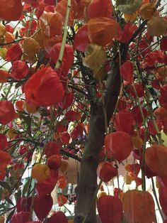 Physalis tree sculpture by Gail
