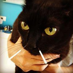 Cat acupuncture for feline asma