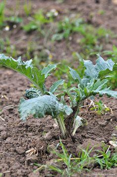 Fiches pratiques sur la culture des légumes.