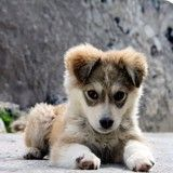 Error-free house training for a new puppy or dog isn't difficult. A complete protocol using treats, a leash and a crate for your dog. Animals And Pets, Baby Animals, Cute Animals, Fluffy Animals, Cute Puppies, Dogs And Puppies, Dogs 101, Pet Dogs, Dog Cat
