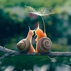 When you have become a snail in your second life. You might have that honeymoon feeling still. These two lovely snails just did that. Remembering the times when All Gods Creatures, Cute Creatures, Beautiful Creatures, Animals Beautiful, Nature Animals, Animals And Pets, Cute Baby Animals, Funny Animals, Animal Pictures