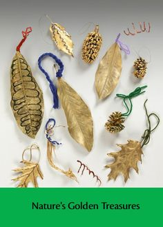 Encourage observations while exploring and collecting fallen plant parts with students.