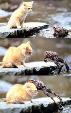 Cat VS Frog