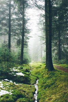 """""""I believe that there is a subtle magnetism in Nature, which, if we unconsciously yield to it, will direct us aright. Beautiful World, Beautiful Places, Walk In The Woods, Parcs, Bushcraft, Belle Photo, Mother Earth, The Great Outdoors, Wonders Of The World"""