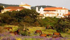 Apresentação | FAR, Lusitano Horse, Portugal - Fundacao Alter Real