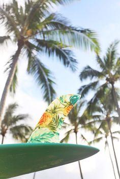 peace,love,surf