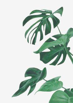 Plants illustration monstera ideas for 2019 Plant Painting, Plant Art, Plant Illustration, Botanical Illustration, Watercolor Leaves, Watercolor Paintings, Green Watercolor, Green Leaves, Plant Leaves