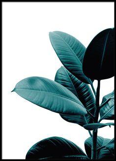 Fin botanisk tavla med växt