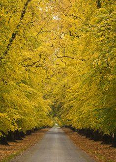 - Entrance to Blair Castle, Blair Atholl in Perthshire Scotland