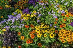 Perennial Design – Perennials Flower Beds- Évelőágy tervezés… – World of Flowers Shade Perennials, Flowers Perennials, Luxembourg Gardens, Shade Flowers, Flower Beds, Gardening Tips, Flower Designs, Fall Decor, Plants
