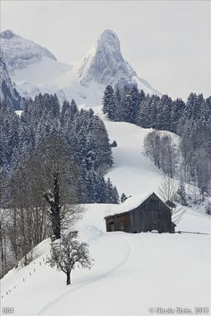 Winter Snow - Appenzell, Switzerland
