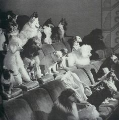 i have no idea what is going on herethe caption says 'obedience class'1958