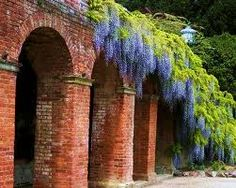 Romantic wisteria draping over rustic brick archways.