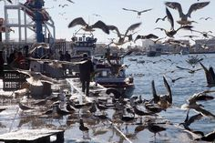 puerto pesquero isla cristina Opera House, Building, Travel, Islands, Cities, Pictures, Viajes, Buildings, Destinations
