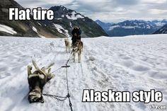 Funny Alaskan Flat Tire Joke Picture | Funny Joke Pictures