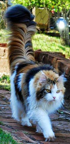 now that's a tail!