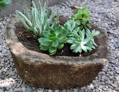 These things are expensive when you buy them in the stores! English Garden Troughs DIY ~ Made from a mixture of cement, peat moss and perlite, its light weight can be used to make both large and small containers. Garden Troughs, Garden Pots, Concrete Planters, Diy Planters, Cement Pots, My Secret Garden, Dream Garden, Container Gardening, Gardening Tips