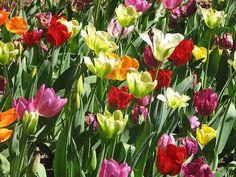 Itt a J enzim amellyel fogyni is lehet! Landscape, Plants, Hacks, Gardening, Scenery, Garten, Landscape Paintings, Glitch, Planters