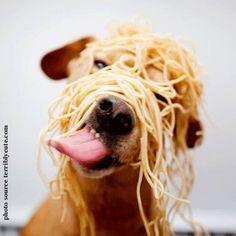 Pasta dog!