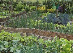 Associations au potager antimaladies et antiparasites - Diy Garten Potager Bio, Potager Garden, Unique Garden, Colorful Garden, Water Plants, Water Garden, Garden Beds, Garden Art, Balcony Garden