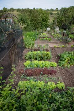 Feed the family: veggie plot, bee keeping