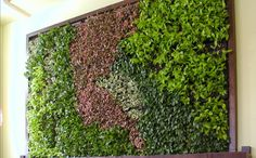 Green walls and vertical gardens are so cool!