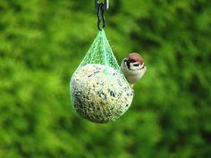 Bird 🐦 ##bird ##photography ##colorful ##bokeh - Martin Kříž - Google+
