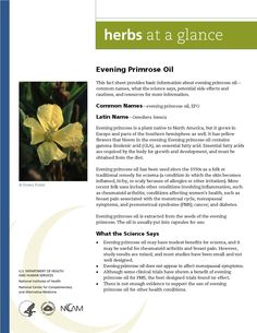 Evening Primrose. Full document available at http://nccam.nih.gov/health/herbsataglance.htm