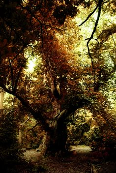 Mystical Forest, Hampstead Heath, England photo via jacki