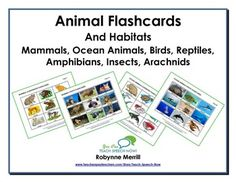 UPDATE: We have added nearly 50 pages that include animal habitats and suggested activities for using the flashcards. An updated extended preview will be available soon. This fun unit includes a total of 462 flashcards! There are two sets of flashcards for each of the following:  -mammals-ocean animals-birds-reptiles-amphibians-insects-arachnids.