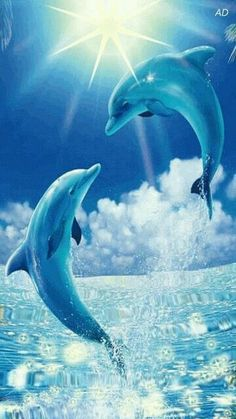Dolphins Dolphins