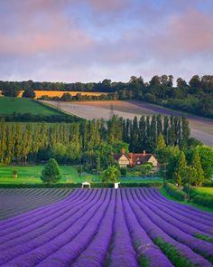A world in green and purple.