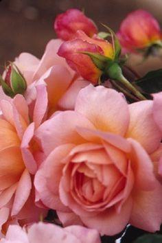 jardim rosado...