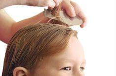 Après tout traitement (shampooing, huile ou lotion), le peigne à poux permet d'ôter les parasites morts ou de décoller les lentes