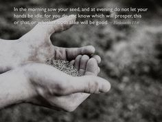 In the morning sow your seed, and at evening do not let your hands be idle; for you do not know which will prosper, this or that, or whether both alike will be good. Don't Let, Let It Be, Ecclesiastes 11, Bible Text, Morning Prayers, Text Quotes, Spiritual Life, Christianity, Texts