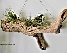 Driftwood wall art- large inch driftwood planter-driftwood shelf-large drift… - All For Herbs And Plants Driftwood Planters, Driftwood Wall Art, Driftwood Projects, Driftwood Mobile, Driftwood Wreath, Plant Wall, Plant Decor, Succulent Planter Diy, Succulents