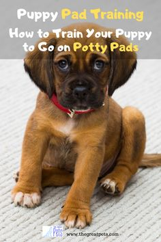 There may be several factors a dog needs to be trained to pee on a pee pad. Immobile dog parents might not take their puppy outside often enough for the canine to eliminate. Some parents train puppies on pee pads before teaching the dog to go outside. #dogs #puppy #dogtraining #dogbehavior #puppytraining #puppybehavior #puppies #puppiestraining Puppy Toilet Training, Puppy Training Classes, Training Your Puppy, Dog Training Equipment, Dog Training Pads, Training Tips, Dog Pee Pads, Puppy Pads, Dog Boredom