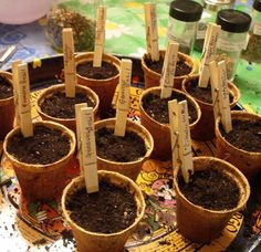 Clothes pin labels for seedlings