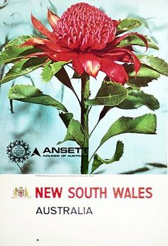 Ansett Airlines of Australia Poster Australian Vintage, Romantic Places, Natural Wonders, Travel Posters, Vintage Posters, Vintage Airline, Pub, South Wales, Posters